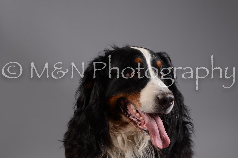 M&N Photography -DSC_1485