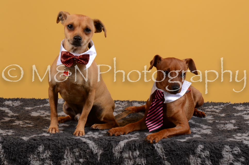 M&N Photography -DSC_4645