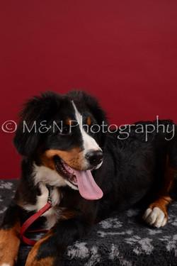 M&N Photography -DSC_3035