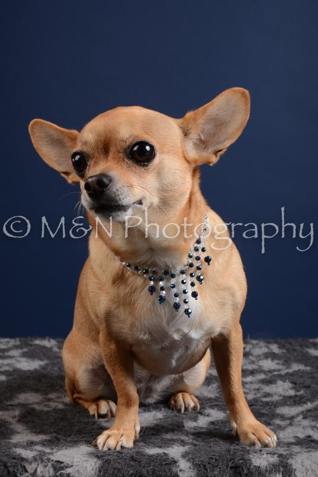 M&N Photography -DSC_3841