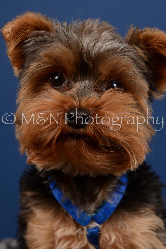 M&N Photography -DSC_5226