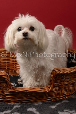 M&N Photography -DSC_6824