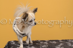 M&N Photography -DSC_4768