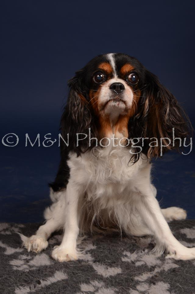 M&N Photography -DSC_0627