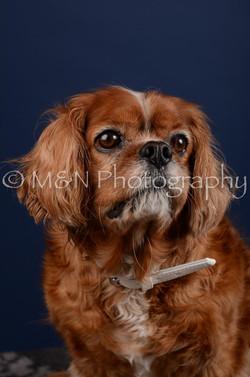 M&N Photography -DSC_4297
