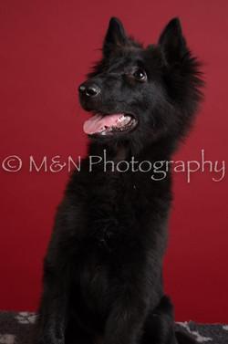 M&N Photography -DSC_3363