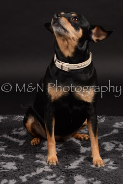 M&N Photography -DSC_9646