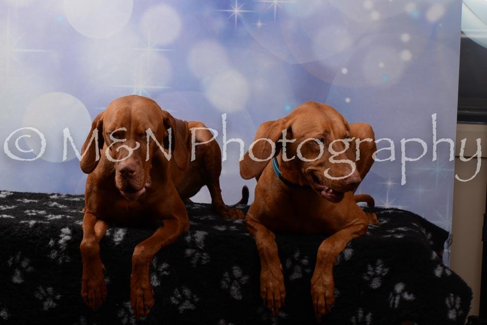 M&N Photography -DSC_7041