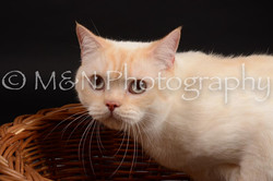 M&N Photography -DSC_9642