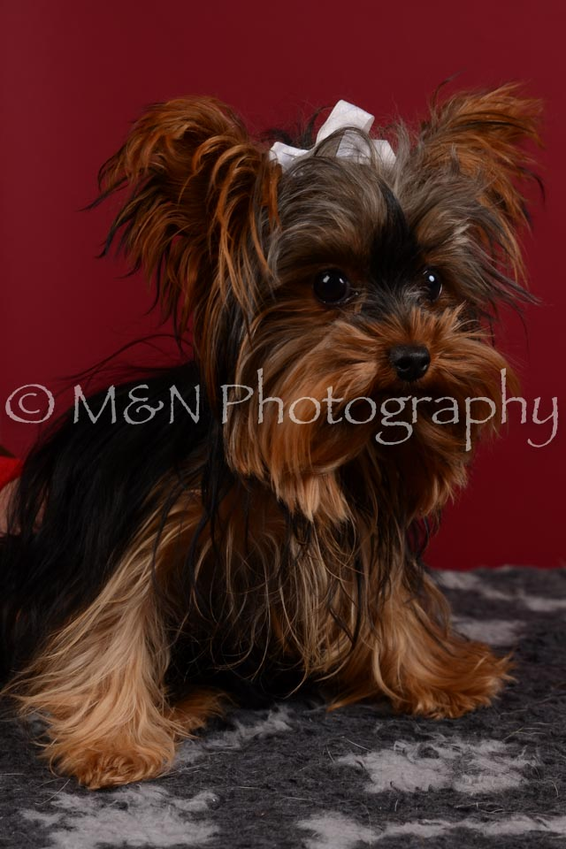 M&N Photography -DSC_3336