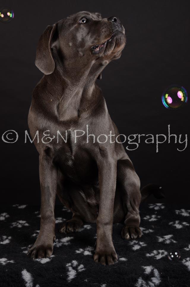 M&N Photography -DSC_5590