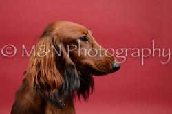 M&N Photography -DSC_8524