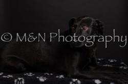 M&N Photography -DSC_5784