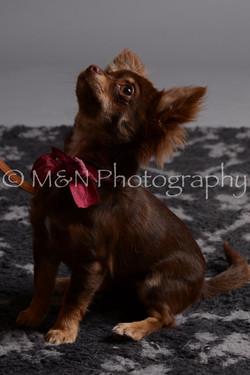 M&N Photography -DSC_2548