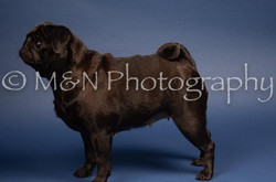 M&N Photography -DSC_3860