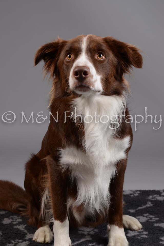 M&N Photography -DSC_1455