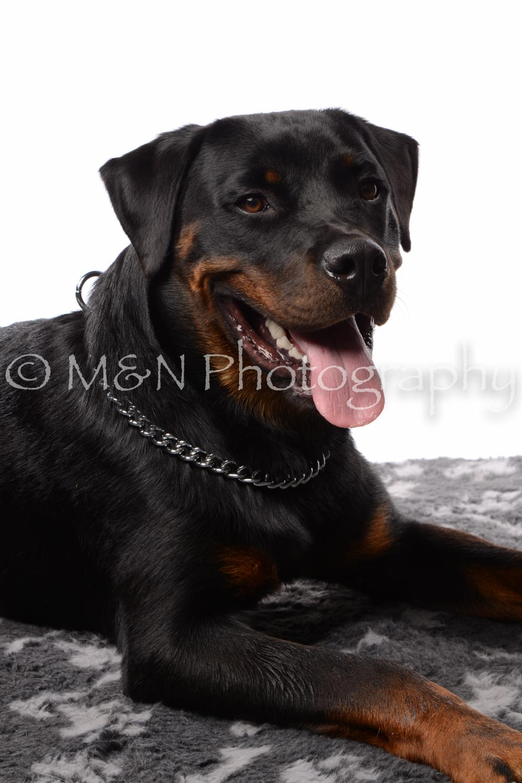 M&N Photography -DSC_8911