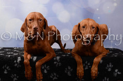 M&N Photography -DSC_7043