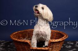 M&N Photography -IMG_4580