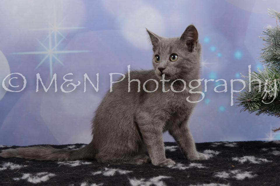 M&N Photography -DSC_6545