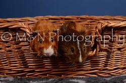 M&N Photography -DSC_5094