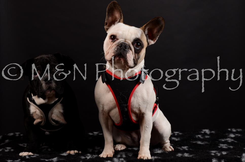 M&N Photography -DSC_5943