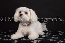 M&N Photography -DSC_5522