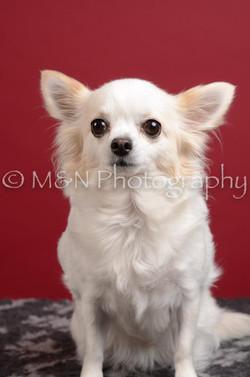 M&N Photography -DSC_3699