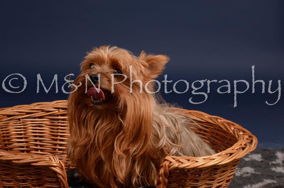 M&N Photography -DSC_0435