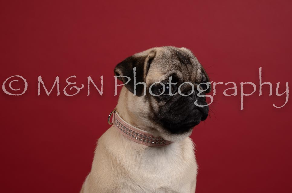 M&N Photography -DSC_3387