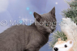 M&N Photography -DSC_6539