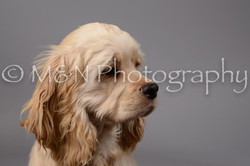 M&N Photography -DSC_1855