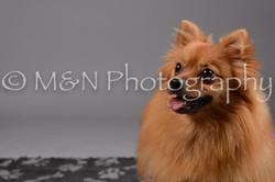 M&N Photography -DSC_2440