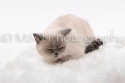M&N Photography -DSC_8789