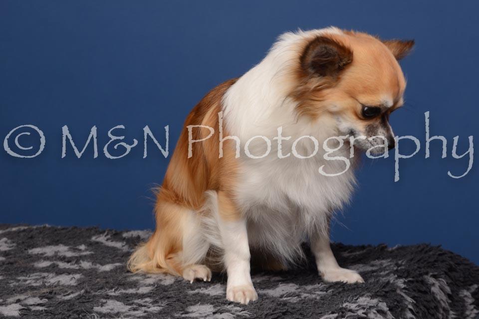 M&N Photography -DSC_4986