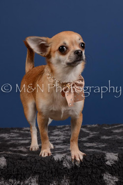 M&N Photography -DSC_5301