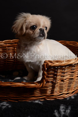 M&N Photography -DSC_6012
