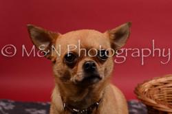 M&N Photography -DSC_8659