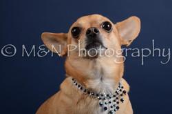 M&N Photography -DSC_3835