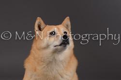 M&N Photography -DSC_2080
