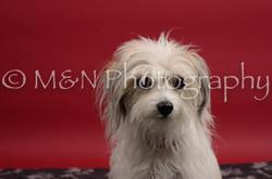 M&N Photography -DSC_8386