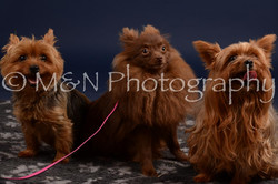 M&N Photography -DSC_0422