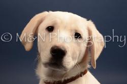 M&N Photography -DSC_4395
