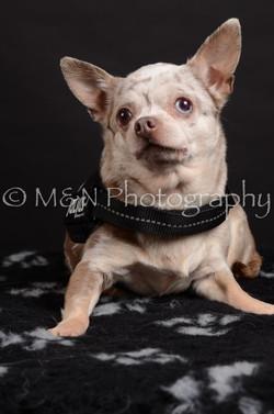 M&N Photography -DSC_5474