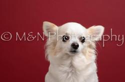 M&N Photography -DSC_3700