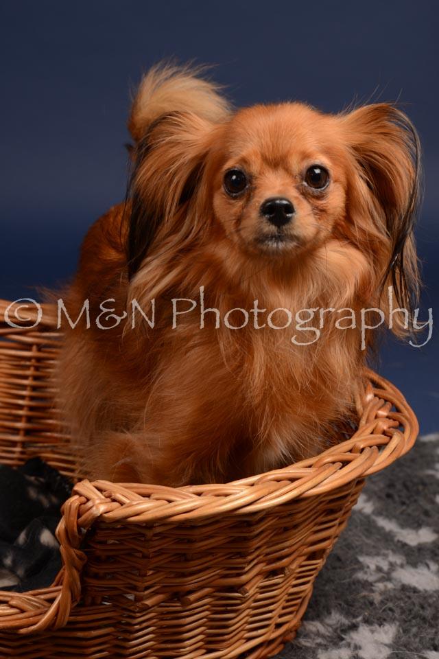 M&N Photography -DSC_0264