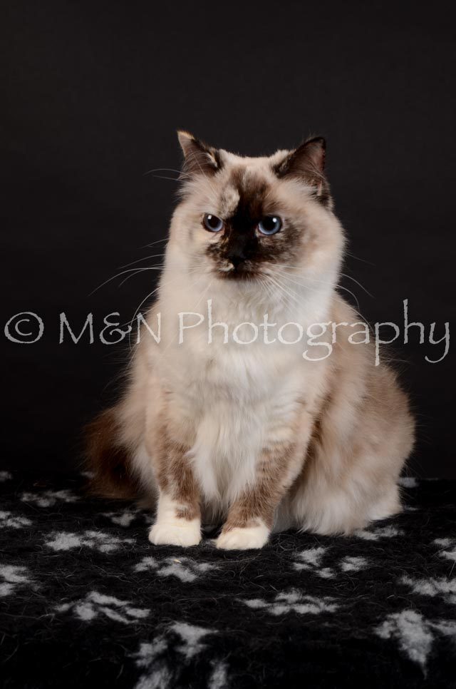 M&N Photography -DSC_5560