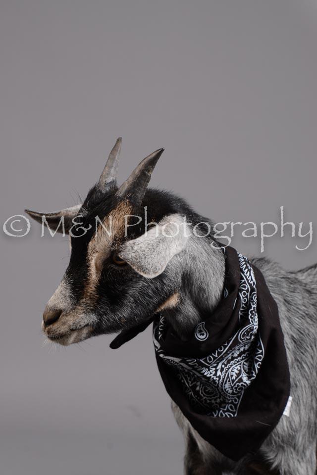 M&N Photography -DSC_2468