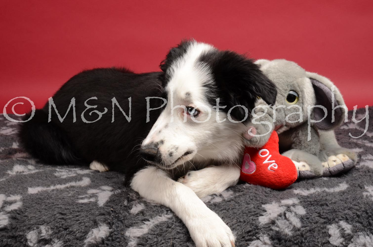 M&N Photography -DSC_8621