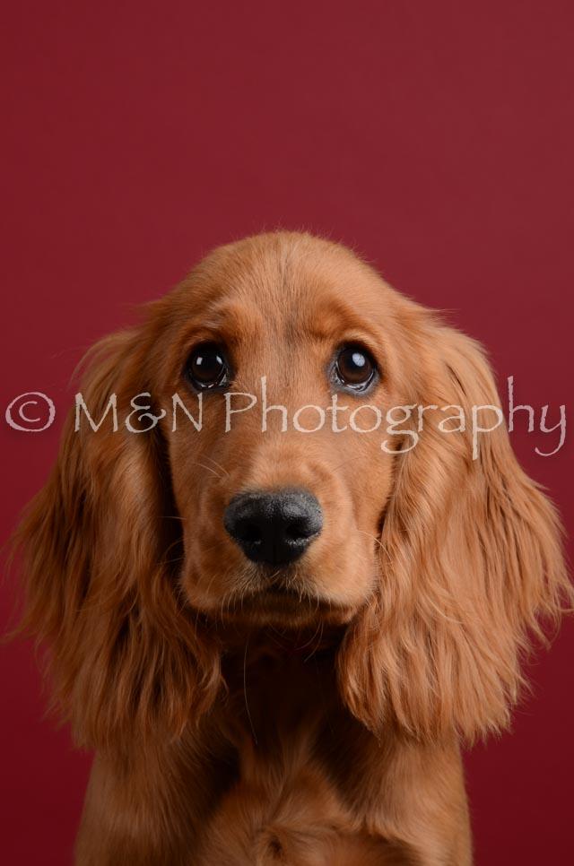 M&N Photography -DSC_3669